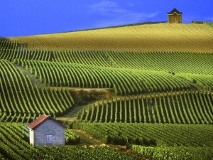 vineyards-champagne-france