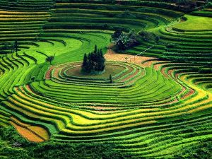 terraced-fields-vietnam_11388_600x450