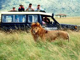african safario