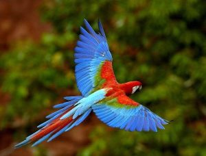 Amazon-Rainforest-Animals