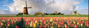 AW_Cruises_Holland