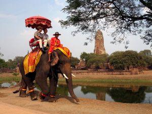 elephant-trekking-ayutthaya_41936_600x450