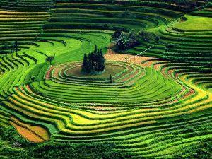terraced-fields-vietnam_11388_600x450