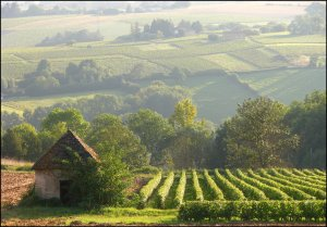 french countryside - Copy