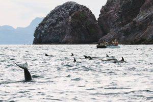 10_skiff_dolphins