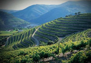 Douro valley 1