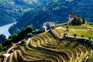 Douro vineyards - Copy