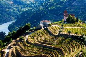 Douro vineyards - Copy