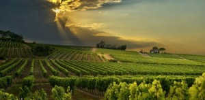 Bergerac-Wine-611x300