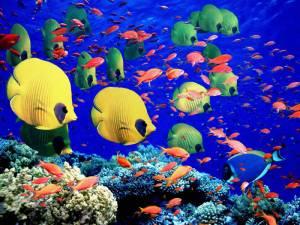 Colorful-Great-Barrier-Reef-Underwater