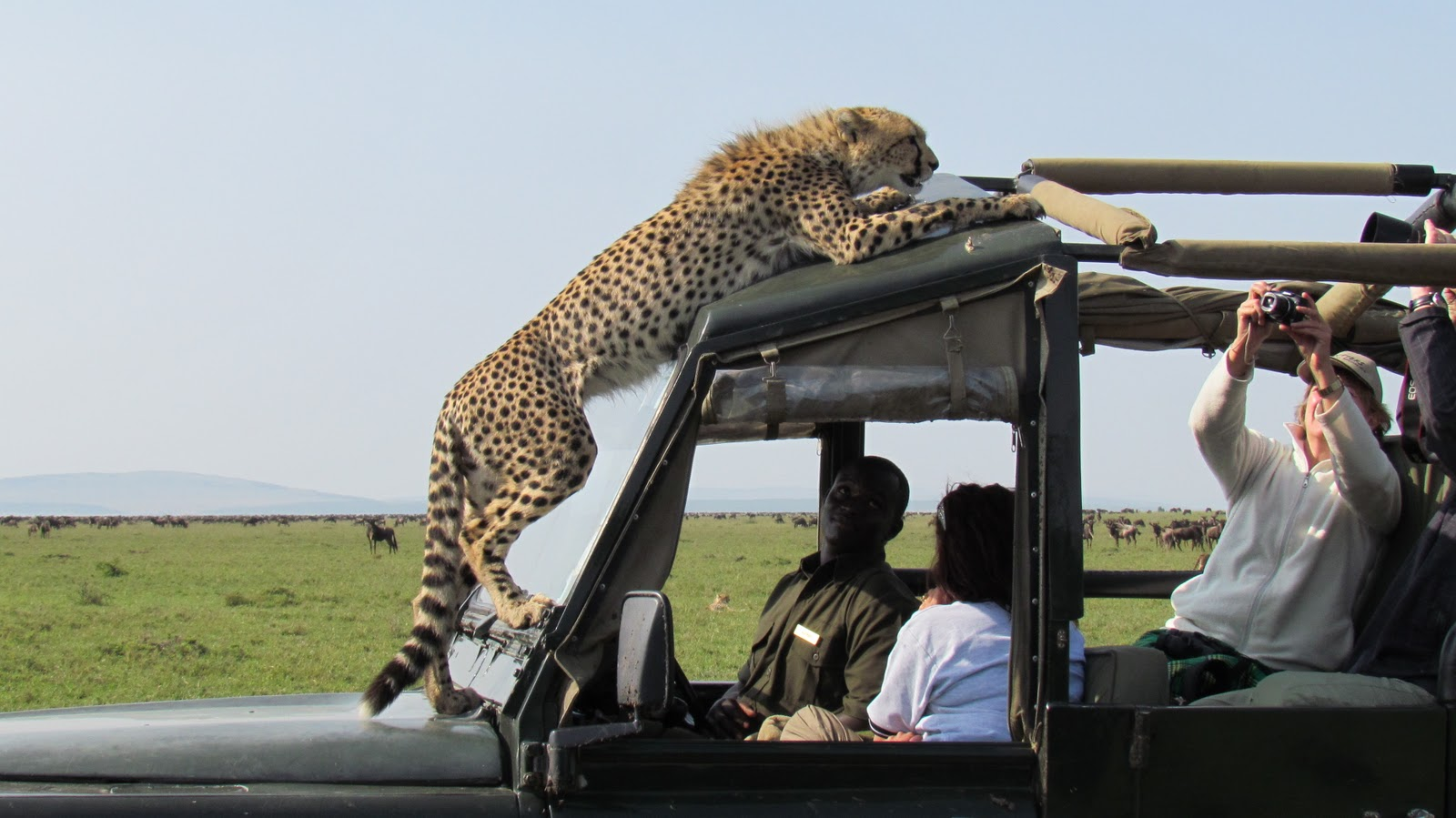 Golden Trails Of Africa Cruise Like A Vip