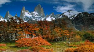 FITZROY AND BEECH TREES (Nothofagus pumilio), IN AUTUMN LOS GLACIARES NATIONAL PARK, PATAGONIA, ARGENTINA