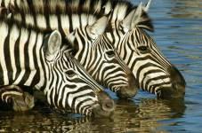 african-safari - Copy