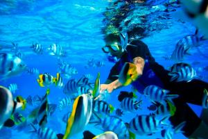 Bora-Bora-Snorkeling