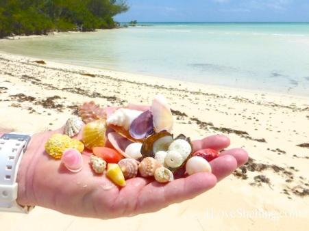 seashells found in grand Bahama island