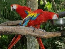Costa Rica 041