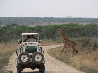 safari 5 - Copy