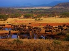 serengeti-national-park-tanzania - Copy