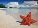 starfish-1122849_960_720 - Copy - Copy - Copy