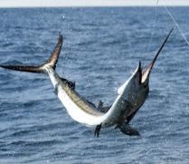 bahamas-light-tackle-fishing