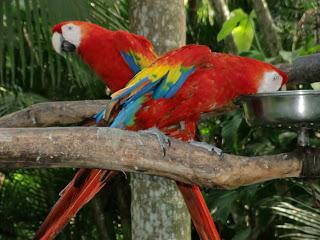 costa-rica-041
