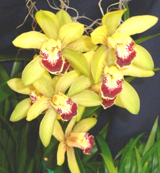 Orchids from Hawaii - Copy - Copy - Copy - Copy