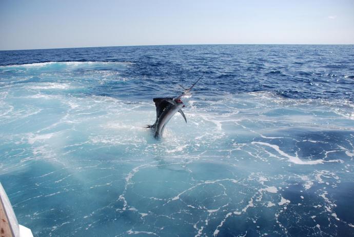 sport-fishing-tour-mazatlan-mexico-6 - Copy