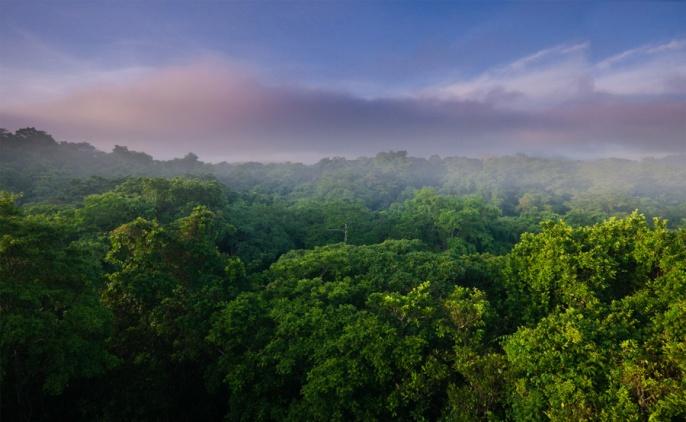 Panama-rain-forest