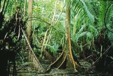 rainforest 1