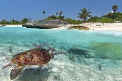 144302_Cayman Islands_SealifeofGrandCayman_11766 - Copy