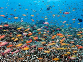 fancy-basses-great-barrier-reef-cr-alamy