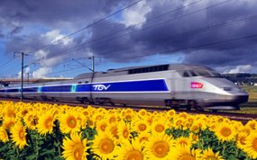 France --- A TGV, Train a Grande Vitesse, High speed train travels through fields of sunflowers and vineyards in France. --- Image by © G. Bowater/Corbis