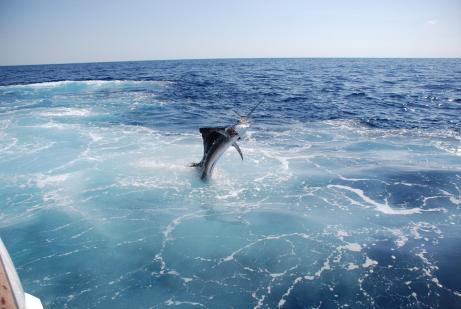 sport-fishing-tour-mazatlan-mexico-6