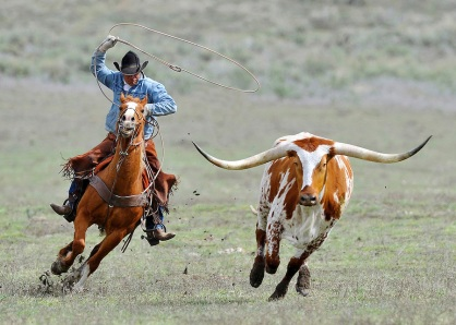 Images from Sombrero Ranch, Colorado USA of Cowboys and horses prir to the Geat American Horse Drive.